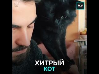 Кот ворует еду — Москва 24