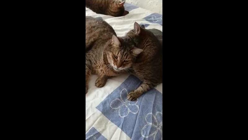 Видео от Академия 42 кошки