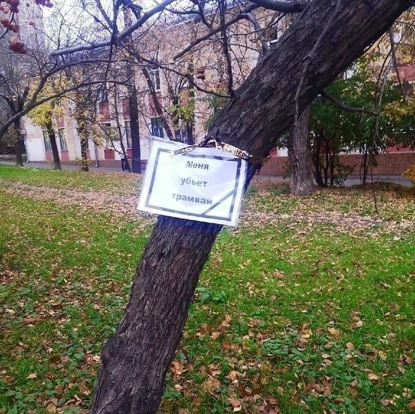 По всей 3-й Парковой на деревьях появились такие т...