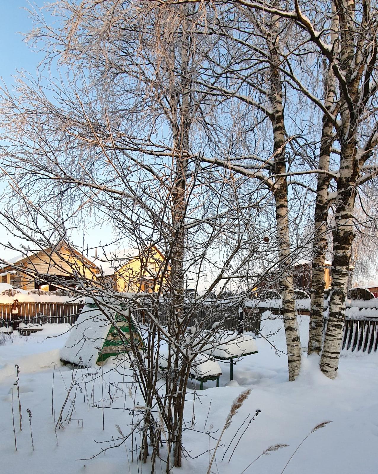 Мороз и солнце! Красота Севера в родной