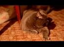 Смешные Кошки Коты ДО СЛЁЗ Видео Приколы с Котами Кошка 720p-720p.mp4