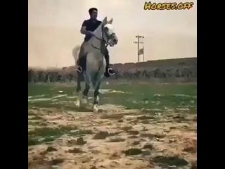 танцующий конь.mp4