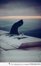 Фотоальбом Белыя Китаца
