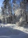 Кострюкова Людмила |  | 42