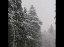🌴В АБХАЗИИ ВЫПАЛ СНЕГ! ЛИСТАЙ ЛЕНТУ️⠀😉Друзья, многие думают, что Абхазия это всегда солнце, пальмы и зелень! И это правда, Аб