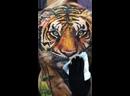 Олег Шепеленко - Татуировка тигр на всю спину