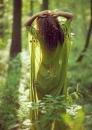 Эвелина Латыпова фотография #15
