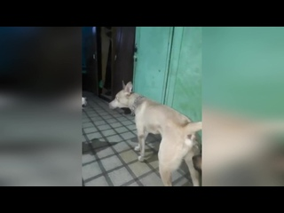 Зоозащитники пытаются остановить мужчину, который подкинул собаку в приют