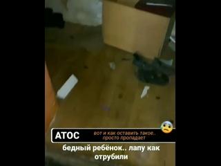 Відео від ЗООСПАС