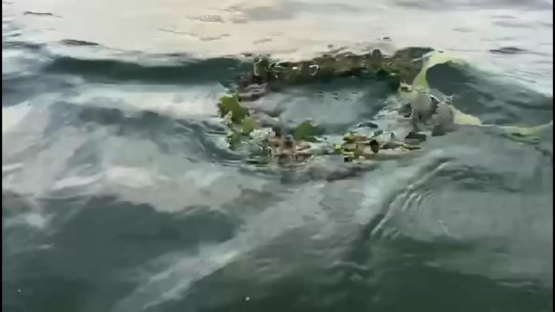 Видео от Выставочный комплекс Атамань