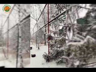 """""""Эволюция Костенки"""" в снегу ❄️❄️❄️  г."""