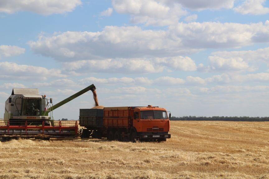В Петровском районе зерновые и зернобобовые культуры в аграрных хозяйствах убраны на площади 51 871,5 гектара