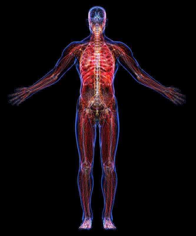 «Борись или беги, ешь или спи» — КАК работает наш организм