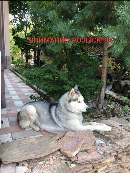 Поиски продолжаются❗ Московская обл., Одинцовский район, ...