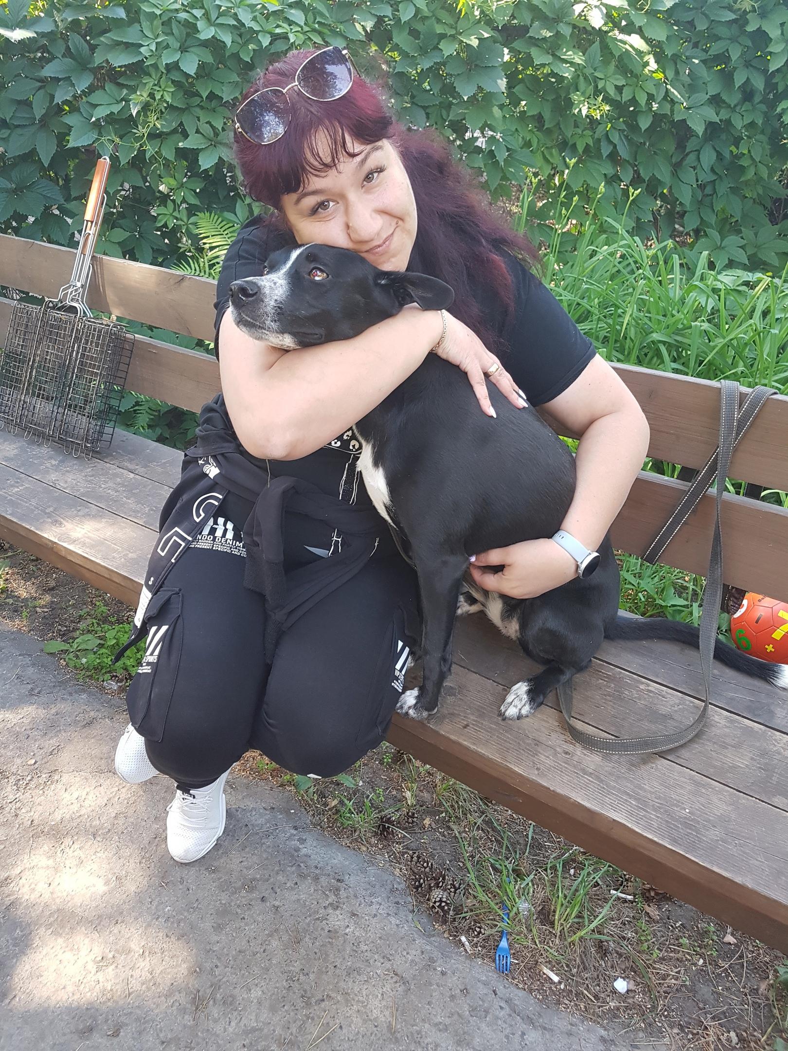 Красавица собака на отдыхе)