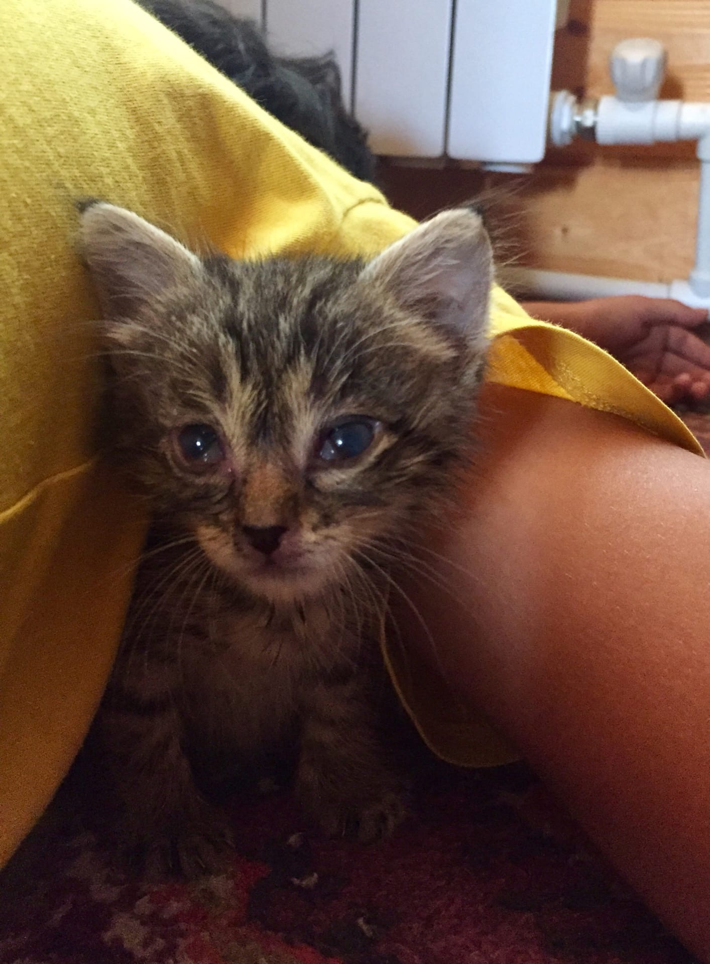Котёнок срочно ищет передержку!  Нашли котёнка