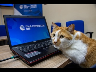 Кот Мостик на новом рабочем месте