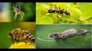 Пчелы Пауки Муравьи Бобры Архитекторы животного мира дикая природа NAT GEO WILD BBC