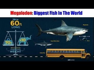 Megalodon: Biggest Fish In The World   Megalodon: Duniya Ki Sabse Badi Machhali