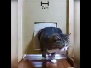 Кошки прям как жидкость