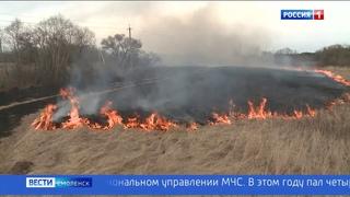 ГТРК «Смоленск» - Из-за пала травы на Смоленщине горят леса