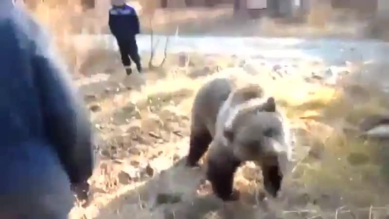 Русские мужики играют с диким медведем heccrbt ve brb buhf n c lbrbv vtldtltv